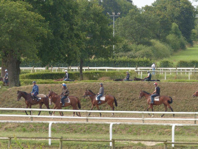 Visite du CERGO 2014 - Les chevaux en attente de la piste