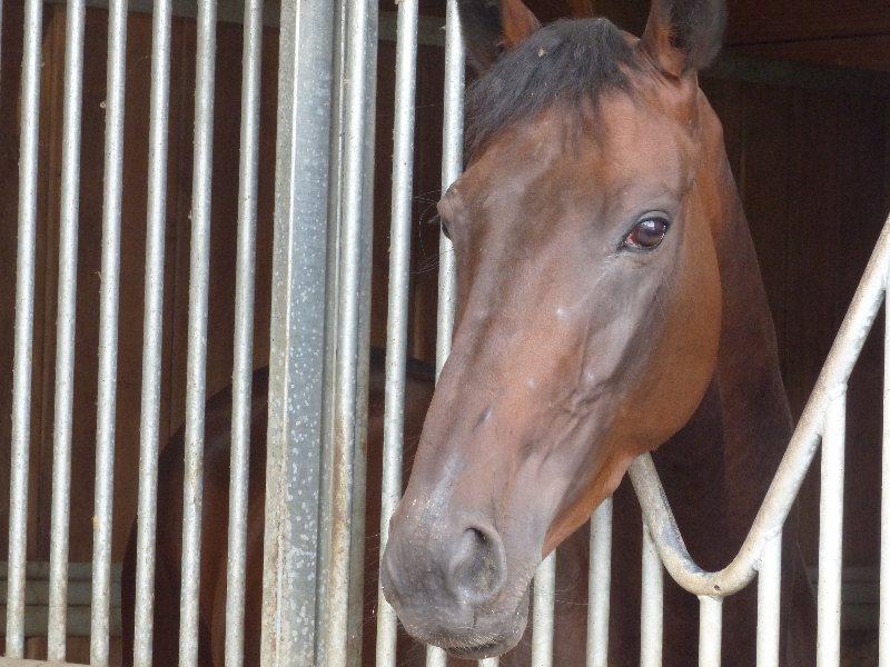 Visite du CERGO 2014 - Cheval de l`écurie Couëtil